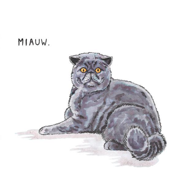 Meow/Miauw